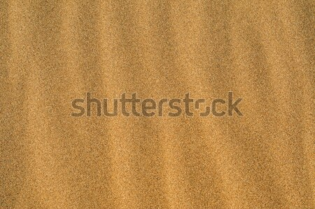 sand of a beach or a desert Stock photo © nito
