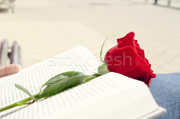 Stock fotó: Könyv · piros · rózsa · szent · nap · közelkép · fiatalember