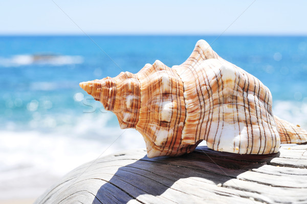 conch on an old washed-out tree trunk in the beach Stock photo © nito