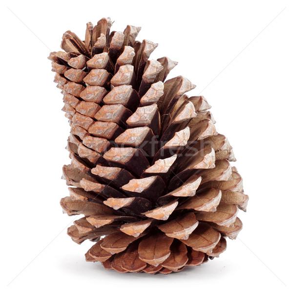 pine cone Stock photo © nito