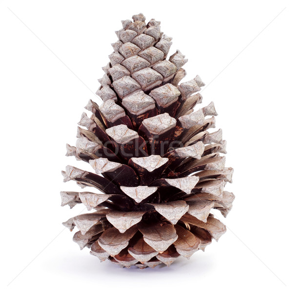 dried pine cone Stock photo © nito
