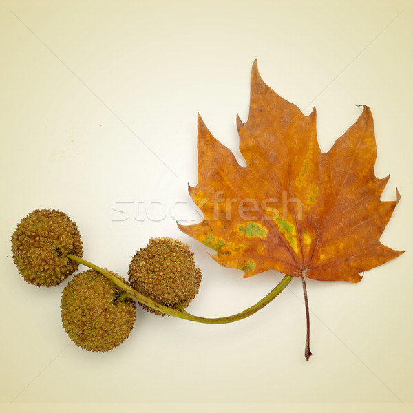 autumn Stock photo © nito