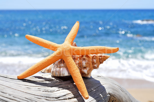 starfish and conch on an old washed-out tree trunk in the beach Stock photo © nito