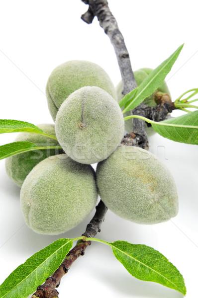 green almonds Stock photo © nito
