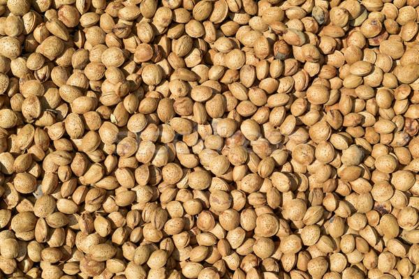 almonds in shell Stock photo © nito