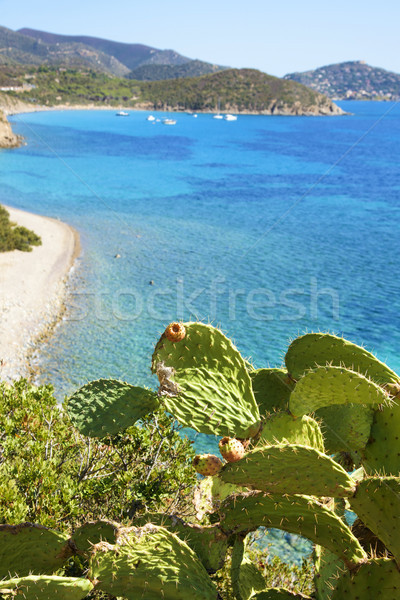 Is Canaleddus beach in Sardinia, Italy Stock photo © nito