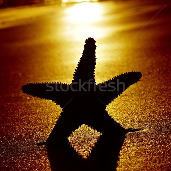 Rive plage coucher du soleil silhouette rétroéclairage eau Photo stock © nito