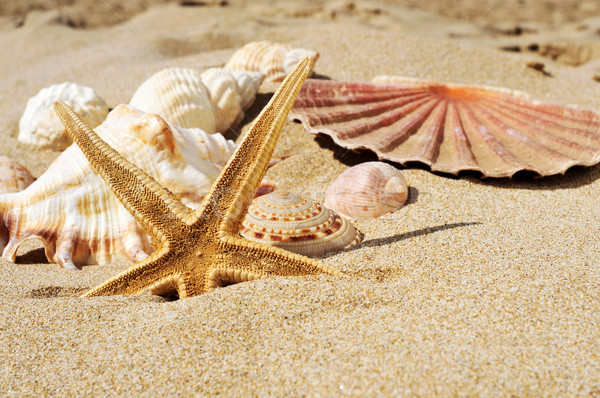 starfish and seashells on the sand of a beach Stock photo © nito