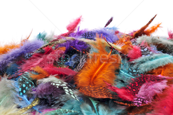 feathers of different colors Stock photo © nito