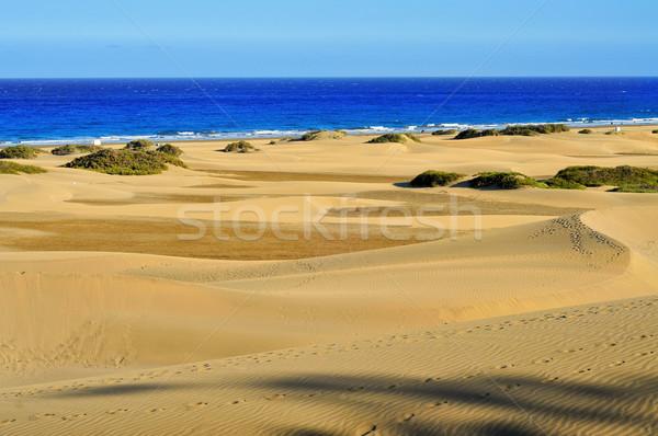 Doğal rezerv İspanya görmek Stok fotoğraf © nito