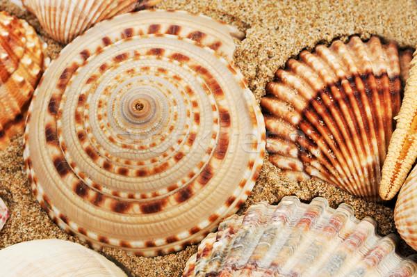 Conchiglie sabbia texture natura estate Foto d'archivio © nito