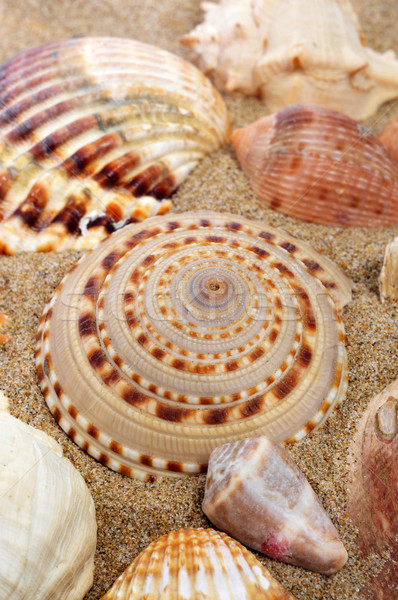Conchiglie sabbia spiaggia primo piano texture estate Foto d'archivio © nito