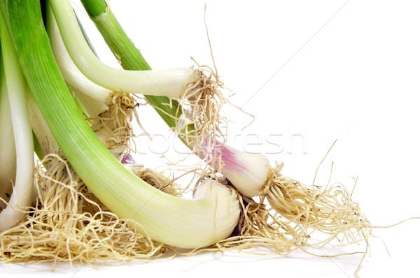 garlic shoots Stock photo © nito