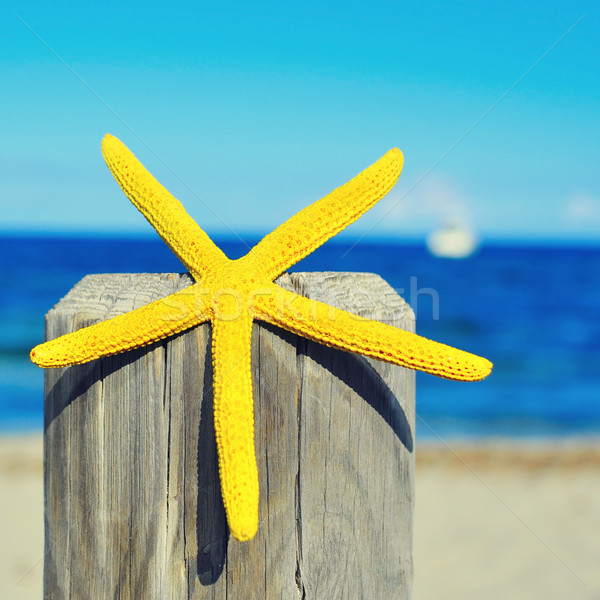 Starfish bois pôle plage jaune Photo stock © nito
