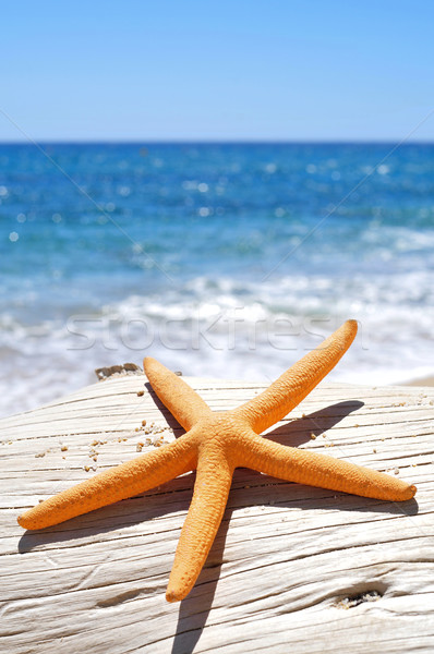 orange starfish on an old washed-out tree trunk on the beach Stock photo © nito