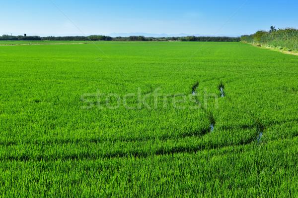 Veld Valencia Spanje panoramisch landschap Stockfoto © nito