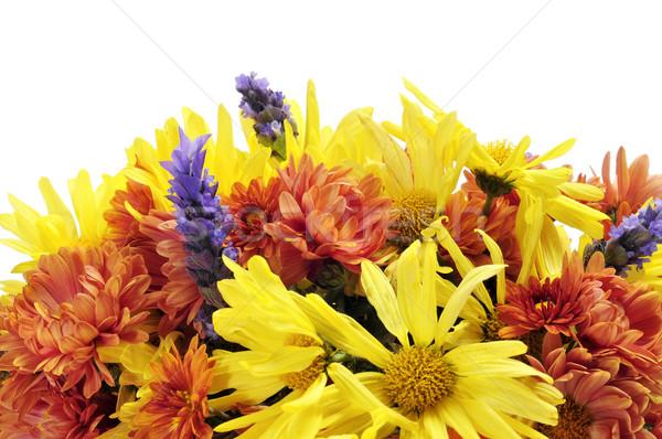 flower arrangement Stock photo © nito