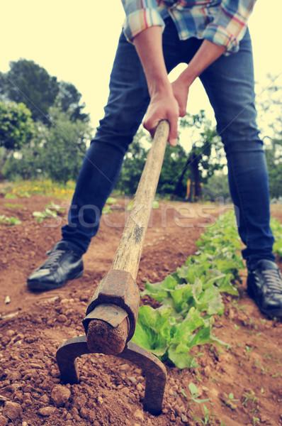 Férfi kert fiatal saláta egészség biztonság Stock fotó © nito