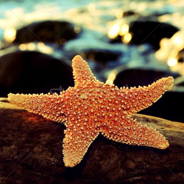 starfish on a rock Stock photo © nito