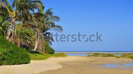 пляж Канарские острова Испания воды морем лет Сток-фото © nito