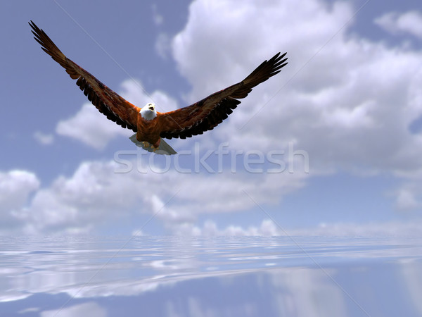 Stock photo: the eagle over the sea
