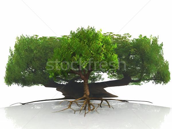 緑の木 反射 自然 美 芸術 夏 ストックフォト © njaj