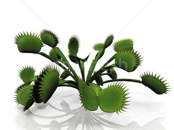 Venus flytrap on a a white background Stock photo © njaj