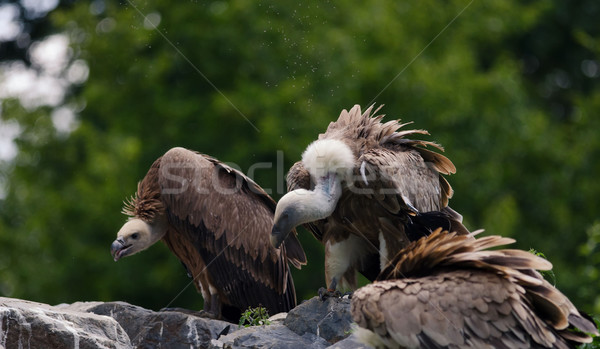 Természet toll madarak Afrika állatok szárny Stock fotó © njaj