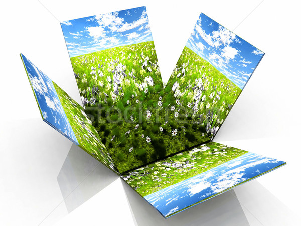 Préri doboz zöld virágok fű természet Stock fotó © njaj