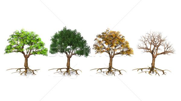 trees  depending on the season Stock photo © njaj