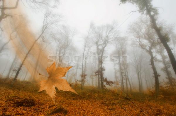 mist in the autumn forest Stock photo © njaj