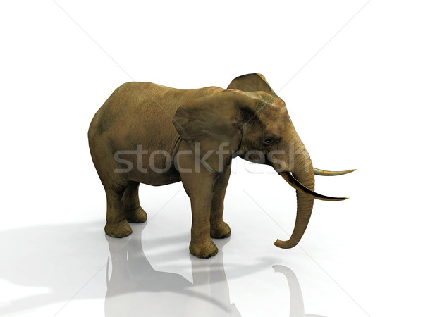 elephant Stock photo © njaj