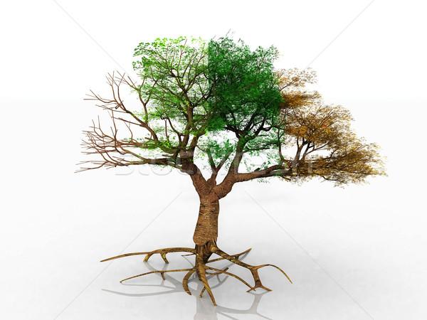 Fa négy évszak szépség művészet nyár levelek Stock fotó © njaj