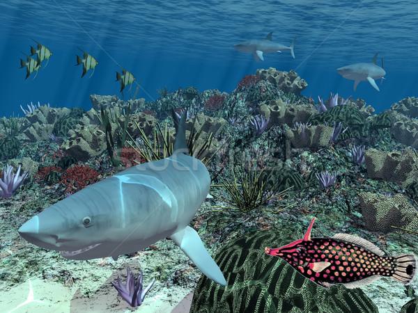 サメ 魚 ボトム 海 自然 海 ストックフォト © njaj