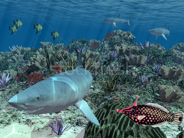 Requin poissons inférieur mer nature océan Photo stock © njaj