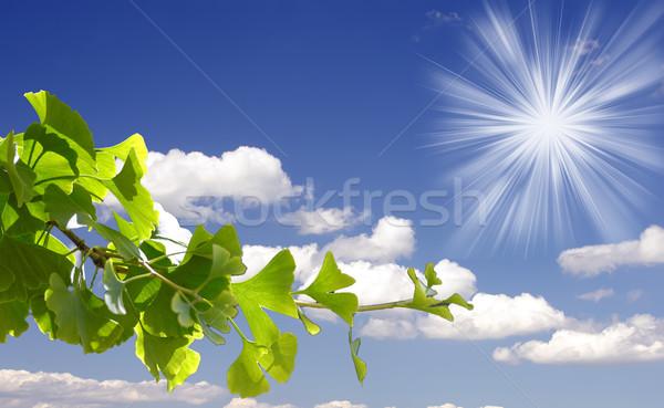 Stock fotó: Levelek · egészséges · fotózás · senki · vízszintes · fehér · háttér
