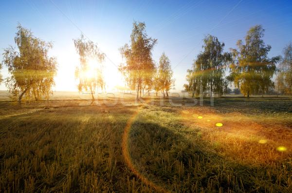 Huş ağacı sonbahar güneş doğa manzara yaprak Stok fotoğraf © njaj