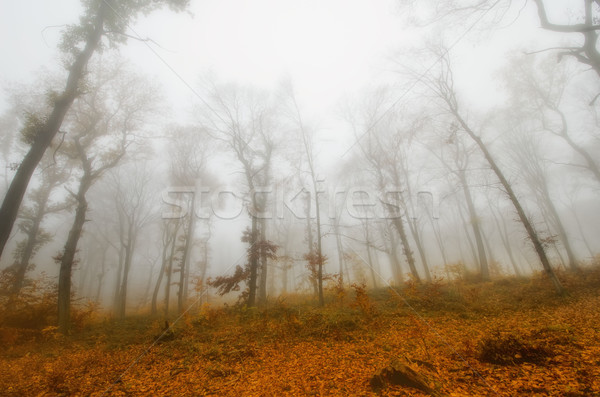 Buğu sonbahar orman ağaç yaprak ağaçlar Stok fotoğraf © njaj