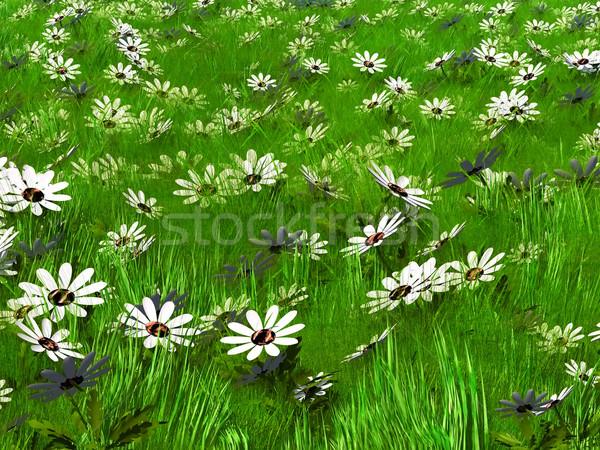 Herbe fleurs élevé fleurs blanches paysage jardin Photo stock © njaj