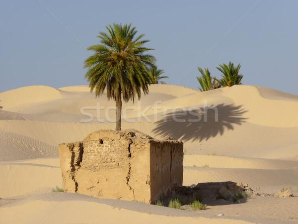 the palm tree in a desert  of sand Stock photo © njaj