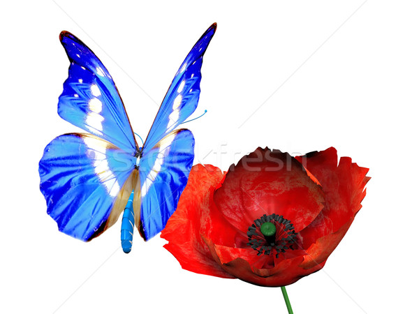 Stock photo: the butterfly and the poppy