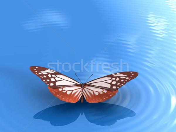 the butterfly Stock photo © njaj