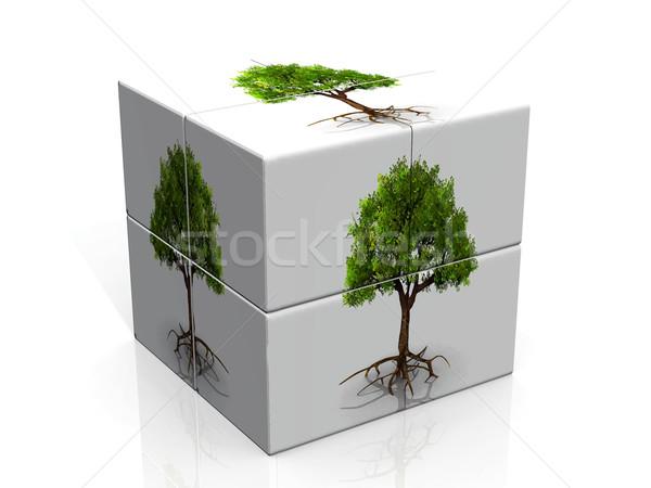 Doboz fák Stock fotó © njaj