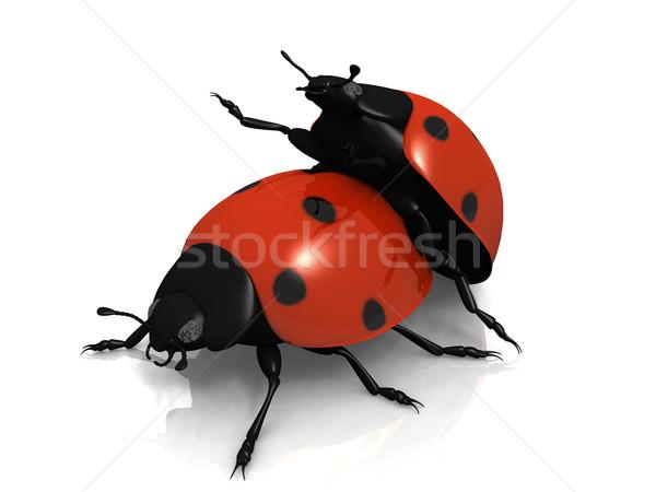 the reproduction of ladybug on white background Stock photo © njaj