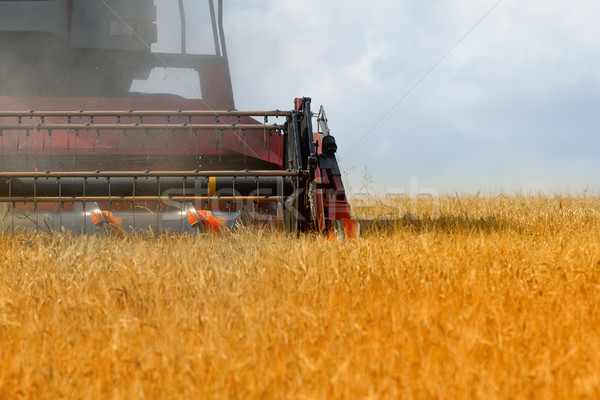 продовольствие пейзаж области фермы пшеницы золото Сток-фото © njaj