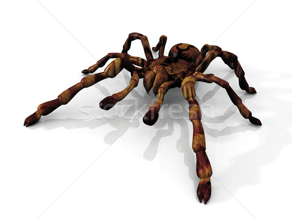 the  tarantula Stock photo © njaj