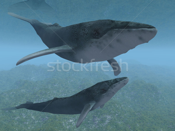 whales Stock photo © njaj