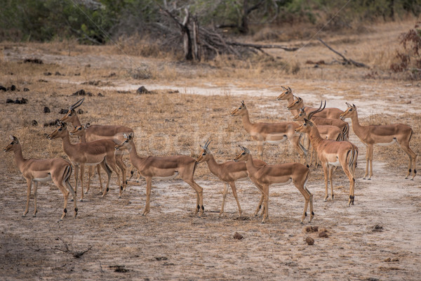 South Africa natuur dier safari zoogdier wild Stockfoto © njaj