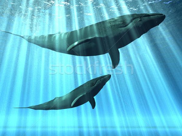 природы дизайна синий защиту кит сохранить Сток-фото © njaj