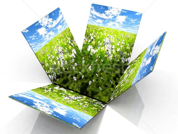 Preria polu zielone kwiaty trawy charakter Zdjęcia stock © njaj